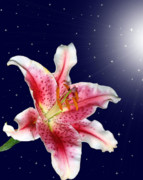 Lily Digital Art - Stargazing by Kristin Elmquist