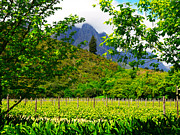 Stellenbosch Art - Stark Conde Wine Estate Stellenbosch South Africa 4 by Charl Bruwer