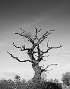 Landscape Photos - Stark Tree by Pixel Chimp