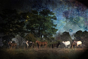 Kathy Clark - Starry Night Horses