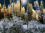 Dewinter Prints - Starshine on a Snowy Wood Print by RC deWinter