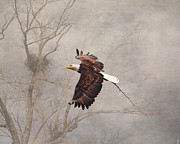 Eagle Metal Prints - Starting Over Metal Print by Jai Johnson