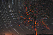 Startrails Digital Art Posters - Startree Poster by Bob Crow