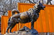 Sled Dog Framed Prints - Statue of Balto in NYC Central Park Framed Print by Anthony Sacco