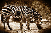 Shelly Stallings - Steampunk Zebra