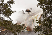 Steamy Bison Print by Sue Smith