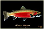 Trout Mixed Media Prints - Steelhead Print by Greg Pezzoni