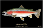 Trout Mixed Media Prints - Steelhead Trout Print by Greg Pezzoni