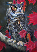 Owl Pastels Framed Prints - Steely Autumn Gaze Framed Print by Marcus Moller