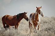 Steens Wild Horses Print by Athena Mckinzie