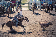 Rodeos Prints - Steer Tripping Print by Daniel Hagerman