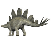 Stegosaurus Digital Art - Stegosaurus, White Background by Craig Brown