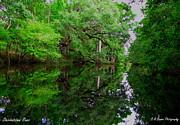 Barbara Bowen - Steinhatchee River
