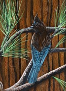 Stellar Jay Print by Jennifer Lake