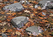 Stepping Stones Posters - Step Into Fall Poster by Vic Harris