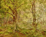 Woodland Scenes Pastels Prints - Stepping Into Woodland Light Print by Barbara Smeaton