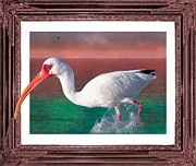 Ibis Framed Prints - Stepping Out Framed Print by East Coast Barrier Islands Betsy A Cutler