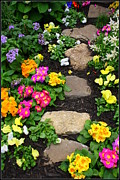 Stepping Stones Prints - Stepping Stones and Spring Flowers Print by Dora Sofia Caputo
