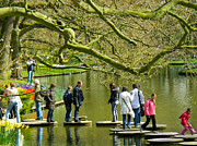 Stepping Stones Prints - Stepping Stones to Beauty at Keukenhof Gardens Lisse Netherlands Print by Robert Ford
