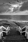 Pelicans Prints - Steps and Pelicans - Black and White Print by Peter Tellone
