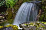 Florid Framed Prints - Steps of the Waterfall Framed Print by Jordan Blackstone