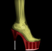 Xrays Posters - Stiletto High-Heeled Shoe Poster by Guy Viner
