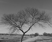 Eunice Miller Metal Prints - Still A Beautiful Tree Metal Print by Eunice Miller