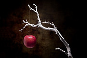 Raw Posters - Still Life Apple Tree Poster by Tom Mc Nemar