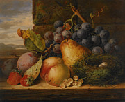 Fruit And Wine Metal Prints - Still Life Grapes Pares Birds Nest Metal Print by Edward Ladell