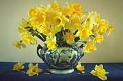 Flower Still Life Prints Prints - Still life with daffodils and Chinese white and blue vase Print by Vickie Adams