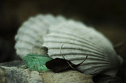 Brown Tones Prints - Still Life with Fossil Shells and Beach Glass Print by Rebecca Sherman