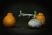 Tangerine Prints - Still Life With Onion Print by Jim Larimer
