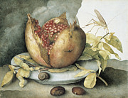 Eating Paintings - Still Life with Open Pomegranate by Giovanna Garzoni