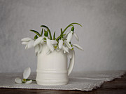 Vase Table Framed Prints - Still life with snowdrops Framed Print by Diana Kraleva