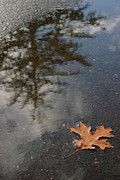 Tree Leaf On Water Photo Prints - Stillness Print by Jeanette French