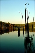 Lake Pyrography Posters - Stillness   Photograph Poster by Iconic Images Art Gallery David Pucciarelli