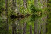 Karol  Livote - Stillness Swamp