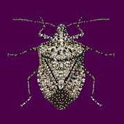 Bedazzle Framed Prints - Stink Bug Bedazzled Framed Print by R  Allen Swezey