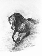 Wild Horse Drawings - Stirring up the Dust by Sheri Marean