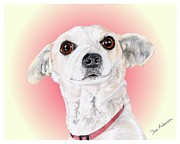 Animal Shelter Mixed Media - Stitch - a former shelter sweetie by Dave Anderson