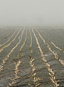 Cornfield Photo Metal Prints - Stitches Metal Print by Odd Jeppesen