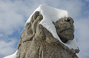 Statue Portrait Photo Prints - Stone lion covered with snow Print by Matthias Hauser