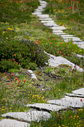 Stepping Stones Prints - Stone Pathway Print by Catherine Utschig