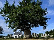 French Photo Originals - Stone tree by Patrick Pestre