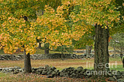 Adam Jones - Stone Wall And Autumn Trees