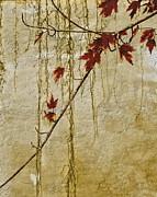 Stone Wall Print by Andrea Kollo