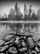 Black And White Photos Posters - Stones and Trees Poster by Davorin Mance