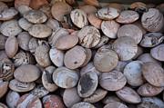 Dany  Lison - Aromatic Stones