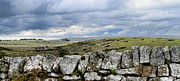 Pastureland Framed Prints - Stonewall Dartmoor Framed Print by Debra Kail