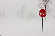 Stop Sign Photos - Stop by Benjamin Williamson